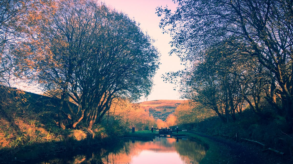 Autumn trees along a canal bank